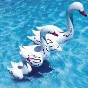 81410-30 | Swan Family Pool Décor - Lifestyle 1
