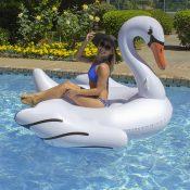 Jumbo Swan