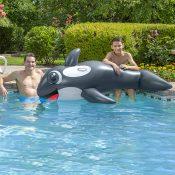 Jumbo Whale Rider